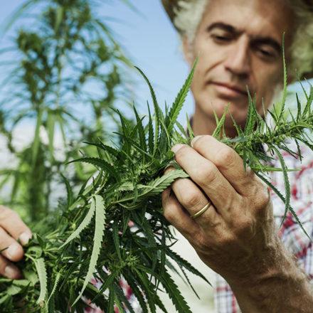 Does Marijuana Make You More Creative?